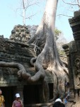 Ta Prohm was lost in the jungle for centuries..