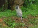 As we entered the wetlands reserve we saw monkeys!!