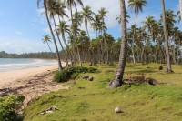 Highlight for album: Dominican Republic