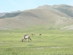 There are more horses than people in Mongolia.  They are used for riding, for their milk, and are eaten.