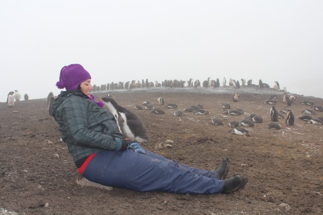 We were directed to always give a 15 feet berth to all wildlife, including penguins. However, we were also told that if we sat quietly sometimes the young penguins would get curious and come check us out. This little guy was checking Celena out..