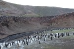 On this tiny island there are 50,000 breeding pairs of Chinstrap Penguins.